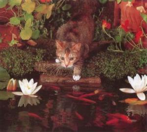 kucing-hal-27