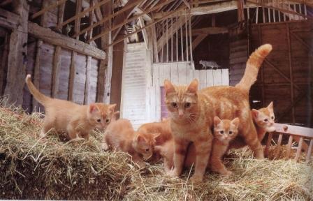kucing-hal-4