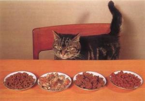 kucing-hal-53