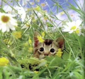 kucing-hal-6