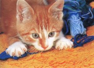 kucing-hal-65