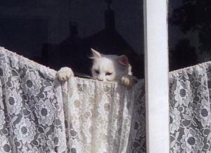 kucing-hal-70