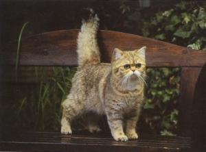 kucing-hal-701
