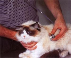 kucing-hal-89