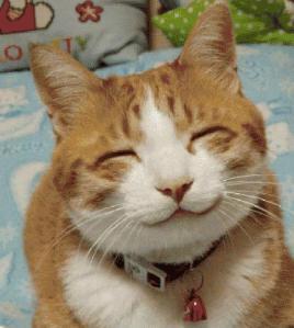 Kucing ngguyu