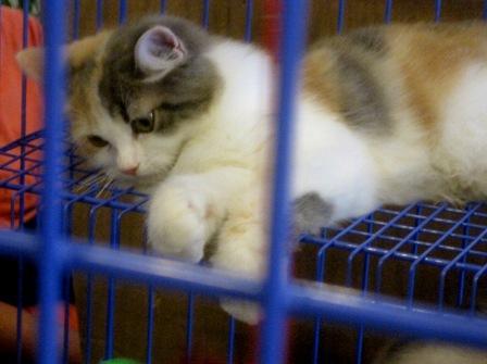 Sayang Kucing Yuuk Tuti Nonka S Veranda